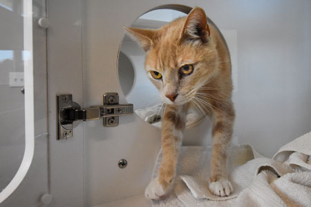 Randolph Animal Hospital Asheboro NC - Cat Boarding