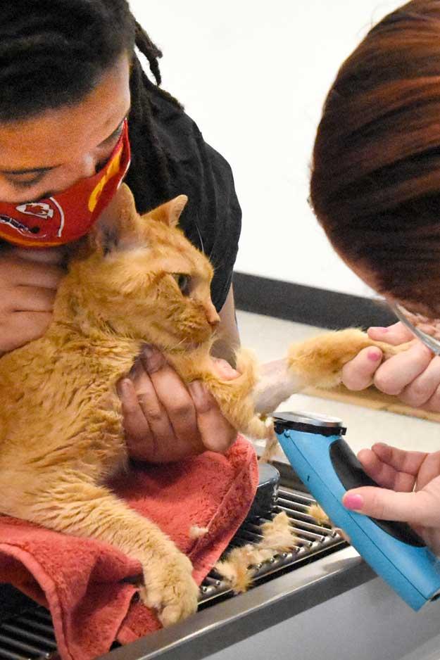 Randolph_Animal Hospital Asheboro NC Cat Exam