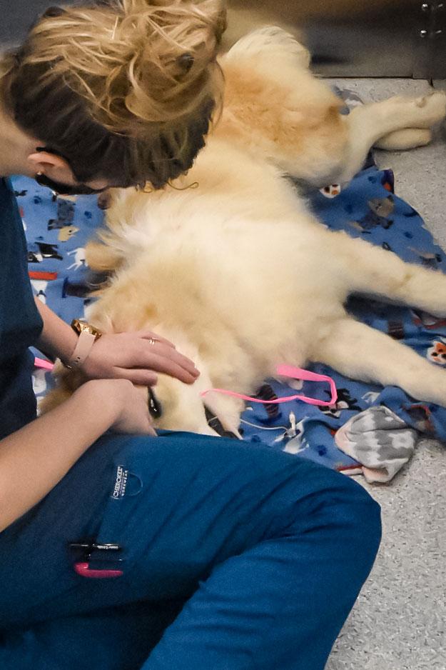 Randolph Animal Hospital Asheboro NC Emergencies