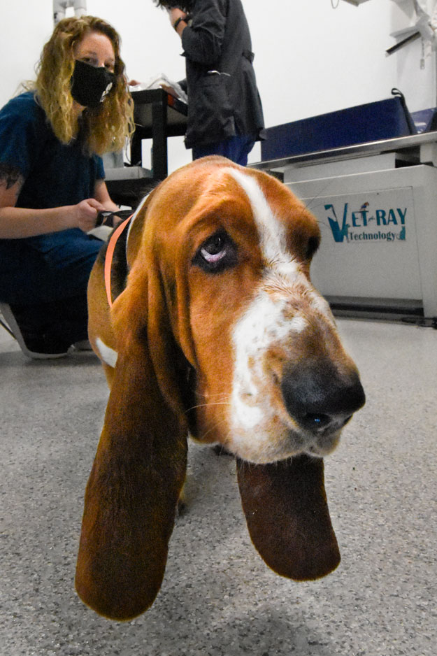 Services- Randolph Animal Hospital - Asheboro, NC - Services