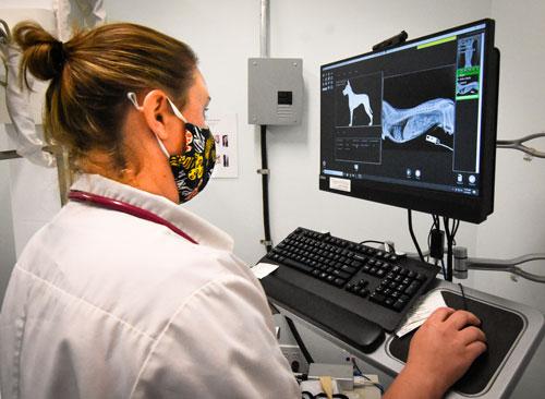 Randolph Animal Hospital Asheboro NC - Review Diagnostic Test Results