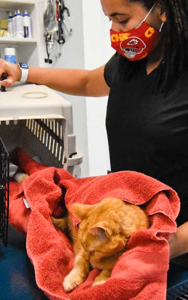 Randolph Animal Hospital Asheboro NC - About Us Checking in Cat